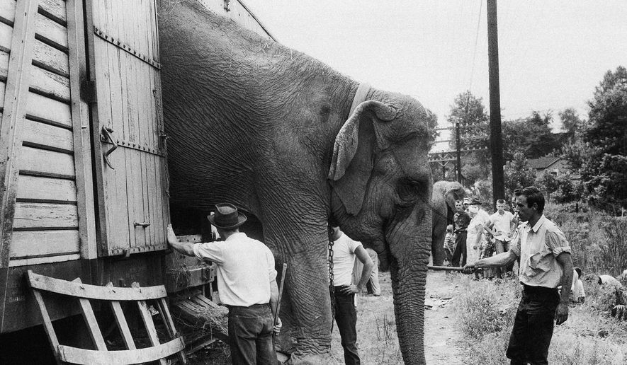 In this July 16, 1956, file photo, a circus hand guides a big elephant down the ramp as the Ringling Bros. and Barnum & Bailey Circus arrives in Pittsburgh. The circus will phase out the show's iconic elephants from its performances by 2018, telling The Associated Press exclusively on Thursday, March 5, 2015 that growing public concern about how the animals are treated led to the decision. (AP Photo) ** FILE **