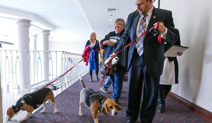 Nevada Sen. Mark Manendo, D-Las Vegas, enters the Legislative Building in Carson City, Nev., on Tuesday, March 24, 2015, with rescue beagles Dean and Luke. Manendo introduced a bill Tuesday that would require labratories that conduct research on dogs and cats to put the animals up for adoption after the study work. (AP Photo/Cathleen Allison)