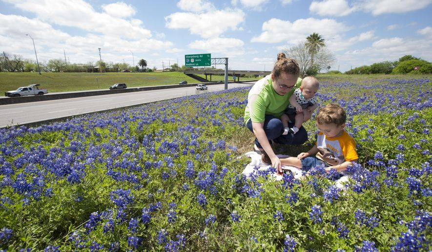 In this photo taken Tuesday, March 24, 2015, Allison Lemos arranges her children Araleigh Lemos, four months, and Chevy Lemos, 2, for a photo in the bluebonnets in an area off Interstate 37 in Corpus Christi, Texas. This year wildflowers sprouted earlier than usual and cooler temperatures have meant they've stuck around longer, said Michael Womack, executive director of the South Texas Botanical Gardens and Nature Center. (AP Photo/Corpus Christi Caller-Times, Rachel Denny Clow)  MANDATORY CREDIT; MAGS OUT; TV OUT