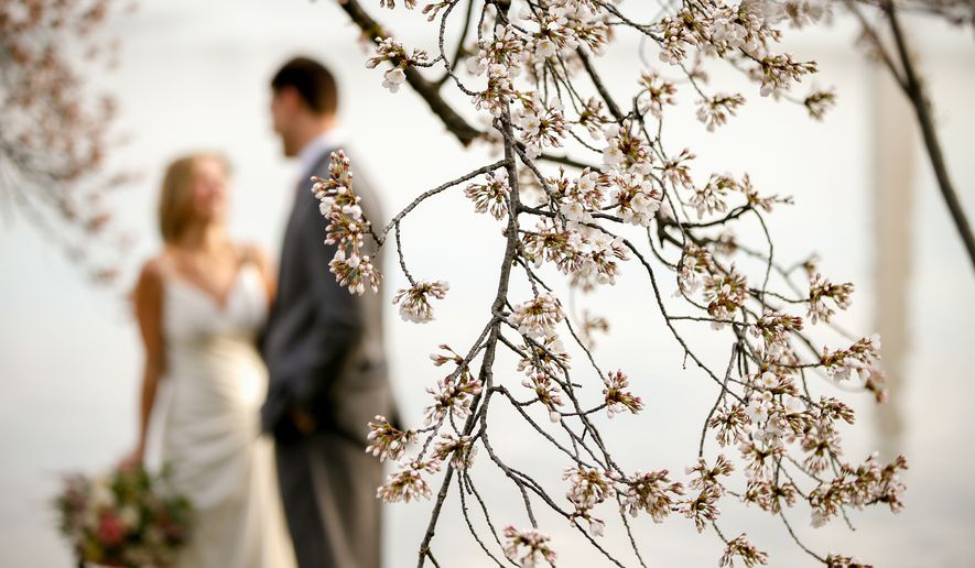Luke and Carolyn Woods of Silver Spring, Md., pose for a photographer among the cherry blossoms trees in Washington, Tuesday, April 7, 2015. Luke and Carolyn were married 4 years ago and are retaking their wedding photos. Officials are calling for a peak bloom period from April 11-14th. (AP Photo/Andrew Harnik)