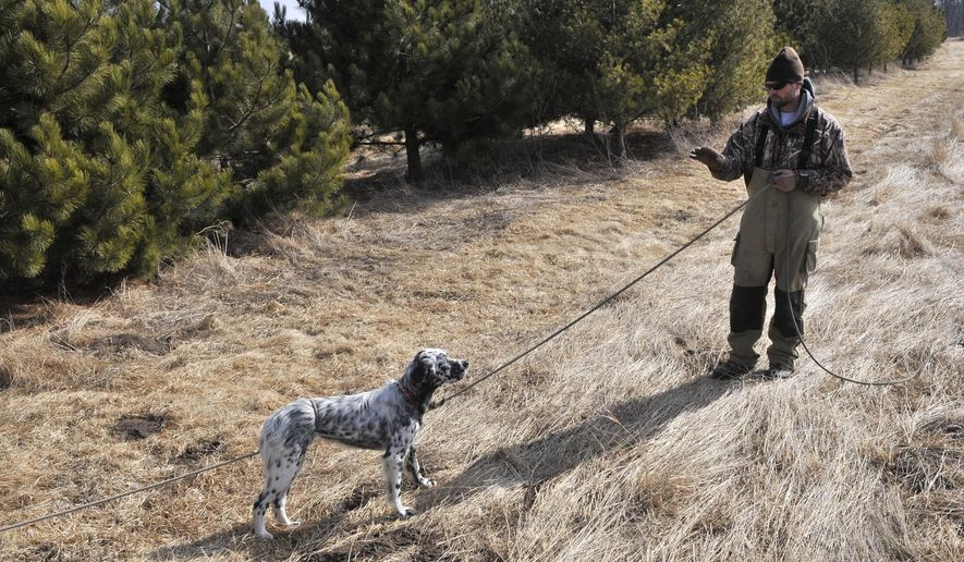 Chad Hines of Willow Creek Kennels works with Duke, an English setter, on Tuesday March 24, 2015, outside Little Falls, Minn. Hines uses rewards-based training, which starts with a clicker and treats when the dogs are just puppies. Some dogs will stay onsite for one month of training, some will stay for three months. (AP Photo/The St. Cloud Times, Ann Wessel)