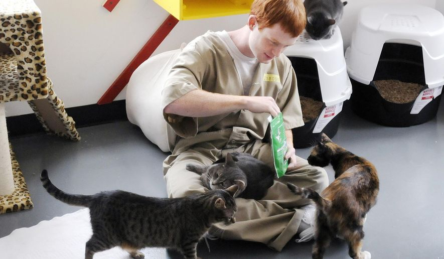 In this Friday, March 27, 2015, photo, Andrew Conley is surrounded by cats as he opens a bag of treats at the Pendleton Correctional Facility in Pendleton, Ind. Cats from the Animal Protection League have found a temporary home at the Pendleton Correctional Facility while they wait for permanent homes. (AP photo/The Herald Bulletin, Don Knight)
