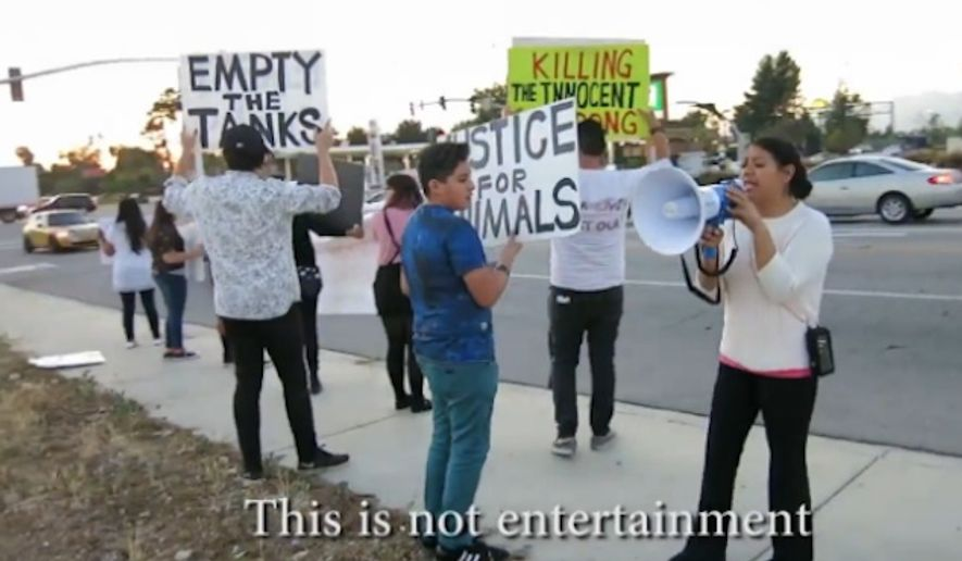 Two animal welfare activists were arrested and two circus performers were injured after a fight broke out at the Ramos Bros. Circus in San Bernardino Friday night, police said. (Live Leak)