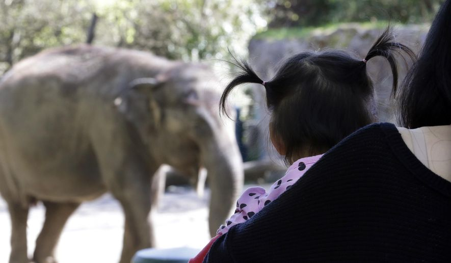 In this file photo taken Thursday, April 9, 2015, a child looks at Bamboo, an Asian elephant, as she walks in her enclosure at the Woodland Park Zoo, in Seattle. (AP Photo/Elaine Thompson) ** FILE **