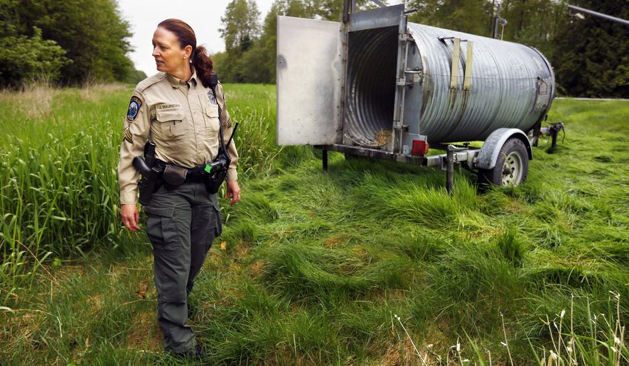 Sgt. Jennifer Maurstad, with the Washington State Department of Fish and Wildlife, checks the location of a bear trap along I-5 near Stanwood, Wash. Tuesday, April 28, 2015. The weekend and Monday brought a steady stream of calls from people reporting spotting a black bear in the median of grass, cedar and pine separating six lanes of north and southbound traffic. (Mark Mulligan/The Herald via AP) MANDATORY CREDIT