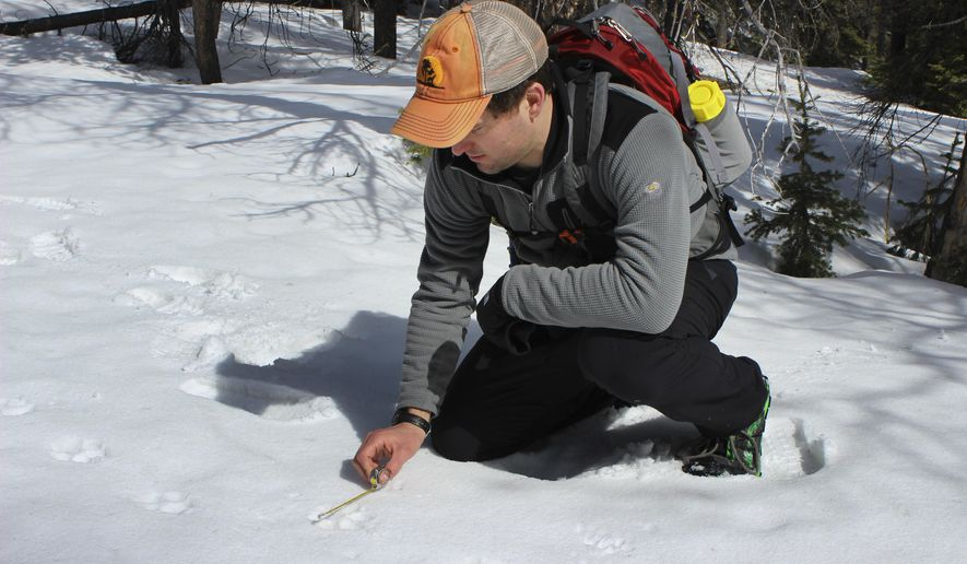 Joe Donohoe measures a wolf track found along the Continental Divide near Canyon Creek, Mont., in March, 2015.  Donohoe and other volunteers met in early March to run one of the transects and see what animals were using the Continental Divide as part of a project to recruit and train volunteers under the tutelage of wildlife researchers at Bozeman-based Wildthings Unlimited with data generated going to the Helena National Forest as it develops a new forest plan. (Tom Kuglin/The Independent Record via AP)
