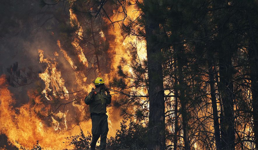 FILE - In this Aug. 25, 2013 file photo, firefighter A.J. Tevis watches the flames of the Rim Fire near Yosemite National Park, Calif. Criminal charges have been dropped against a hunter accused of starting the massive wildfire that burned the Stanislaus National Forest and part of Yosemite National Park, federal prosecutors announced Friday, May 1, 2015. Two key witnesses have unexpectedly died since the indictment was handed down last year against Matthew Emerald, prosecutors say. The blaze burned for two months, scorching 400 acres and cost $125 million in to fight. (AP Photo/Jae C. Hong, File)