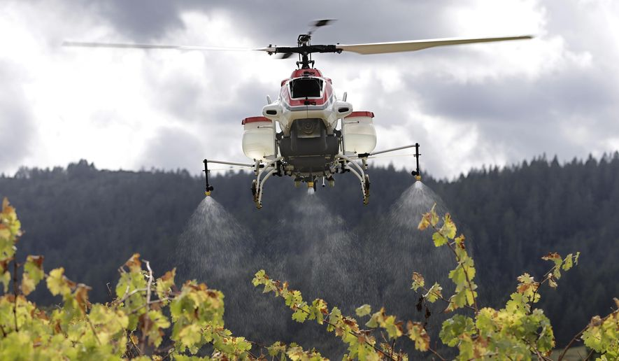 File - In this Oct. 15, 2014, file photo, a drone called the RMAX, a remotely piloted helicopter, sprays water over grapevines during a demonstration of it's aerial application capabilities at the University of California, Davis' Oakville Station test vineyard in Oakville, Calif. The drone large enough to carry tanks of fertilizers and pesticides has won rare approval from federal authorities to spray crops in the United States, officials said Tuesday, May 5, 2015. (AP Photo/Rich Pedroncelli, File)