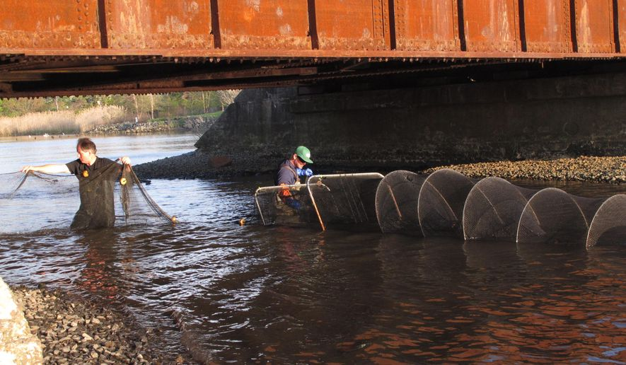 In this May 4, 2015 photo, Pim Van Hemmen, left, and Al Modjeski, right, of the American Littoral Society environmental group, stretch large fish nets under a railroad overpass at Wreck Pond in Spring Lake, N.J. The group and several government agencies are studying fish populations in the pond before building a $4 million tunnel to help fish get to and from the ocean and the pond more easily, while reducing flooding risk after Superstorm Sandy. (AP Photo/Wayne Parry)