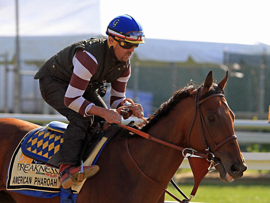 Exercise rider Jorge Alvarez gallops Kentucky Derby winner and Preakness Stakes favorite American Pharoah at Pimlico Race Course in Baltimore, Thursday, May 14, 2015.  (AP Photo/Garry Jones)