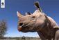 rhino copy.jpg