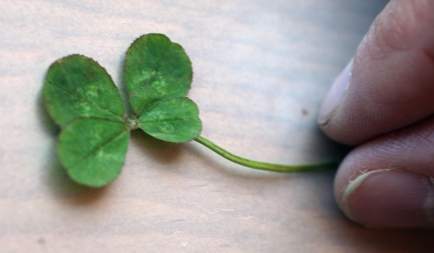 ADVANCE FOR THE WEEKEND OF MAY 23-25 AND THEREAFTER - In a Monday May 18, 2015 photo, Renee Baker shows off a four leaf clovers she found in her yard near Sperry, Iowa. The find started after giving her keepsake a glass clover to a friend, Matt Clover, who is battling cancer. (John Gaines/The Hawk Eye via AP)