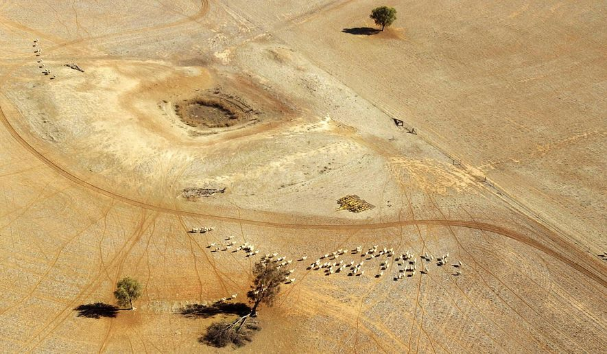 FILE - In this July 13, 2002, file photo, sheep wander parched land near a dry reservoir on a Condobolin property, 460 kilometers (285 miles) northwest of Sydney. On the world's driest inhabited continent, drought is a part of life, with the struggle to survive in a land short on water a constant thread in the country's history. The U.S. state of California is looking to Australia for advice on surviving its own drought. (AP Photo/Rick Rycroft, File)