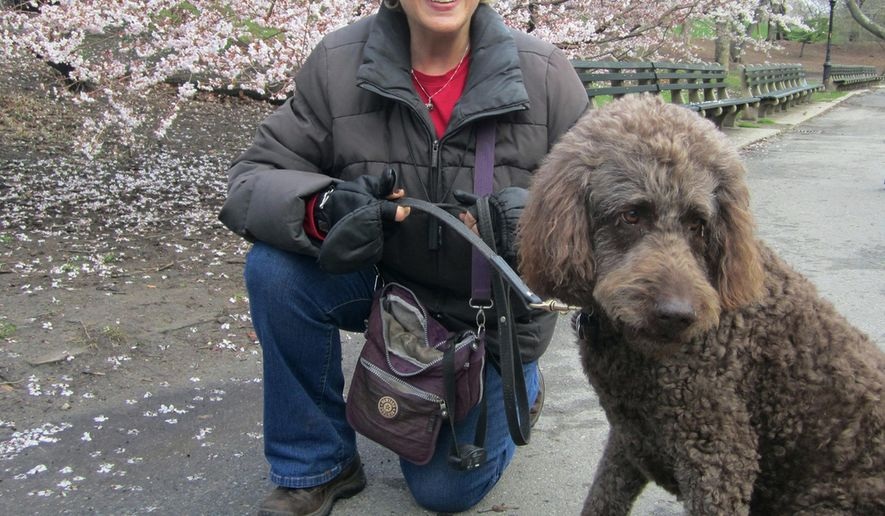In this April 2014 photo provided by B.L. Ochman, Ochman poses with dog Benny, an 80-pound labradoodle in New York's Central Park. Hotels ranging from major chains to small outposts are capitalizing on the wave of travelers who bring their dogs, some by charging for perks that pamper pets and others by expanding fees. What started as a basic, one-time pet fee has blossomed into a per-night charge at many places and costs that can total hundreds. (Dominique Milbank/Courtesy of B.L. Ochman via AP)
