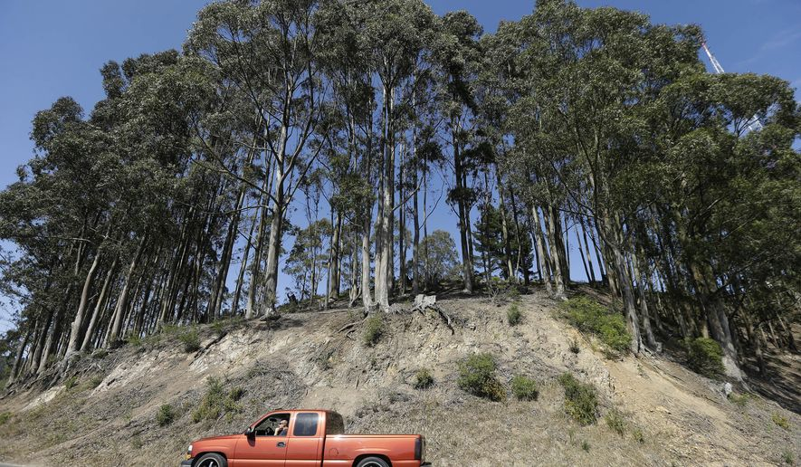 A vehicle drives past a row of trees along Grizzly Peak Boulevard west of the Caldicott Tunnel in Oakland, Calif., Tuesday, June 2, 2015.  City officials accepted a $4 million federal grant to chop down trees in the ritzy Oakland hills, a decision that ignited debate over how best to prevent deadly wildfires in the affluent Northern California region.  (AP Photo/Jeff Chiu)