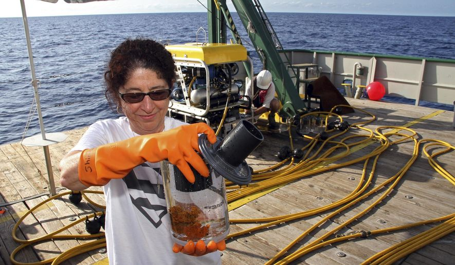 ADVANCE FOR SUNDAY, JUNE 7, 2015, In this photo taken May, 8, 2015, in the Gulf of Mexico, provided by Florida Atlantic University/Harbor Branch Oceanographic Institute/South Florida Sun-Sentinel, a scientist places a sponge in a jar to be tested. Florida Atlantic University scientists have developed a sophisticated device that allows them to inspect ocean reefs and collect sponges with chemicals to fight an array of diseases, from Alzheimer's to cancer. (Florida Atlantic University/Harbor Branch Oceanographic Institute/South Florida Sun-Sentinel via AP)