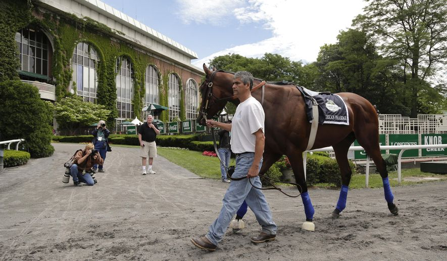 Kentucky Derby and Preakness Stakes winner American Pharoah is  is schooled in the paddock, Thursday, June 4, 2015, in Elmont, N.Y. American Pharoah will try for the Triple Crown when he runs in Saturday's 147th running of the Belmont Stakes horse race. (AP Photo/Julie Jacobson)