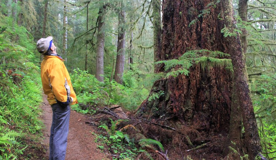 In this April 28, 2015 photo, the 6.2 mile Gwynn Creek Loop takes hikers through old-growth forest and along the Oregon Coast Trail, which features views of Cape Perpetua in Oregon. (Zach Urness/Statesman-Journal via AP)