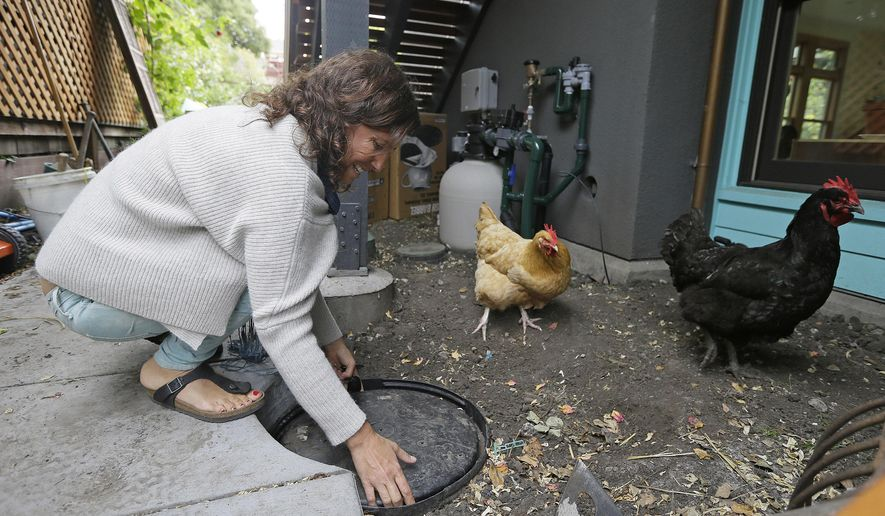 In this photo taken Wednesday, May 27, 2015, Catarina Negrin removes the cover to a gray water collection point outside her home in Berkeley, Calif. (AP Photo/Eric Risberg)