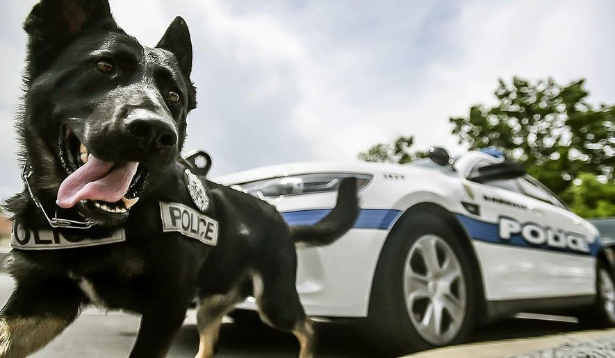 In this photo taken on Tuesday, May 26, 2015, Danville Police Officer Hobie Daugherty trains with his K9 named Petty at the Danville City Hall in Danville, Ky. (Clay Jackson/The Advocate-Messenger via AP) TABLOIDS OUT