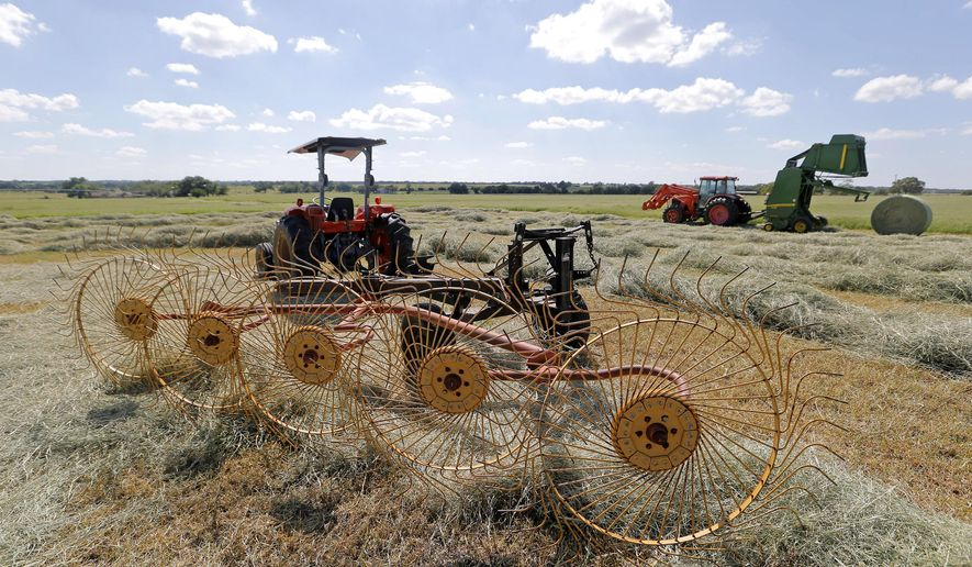 Employee Jesse Boone bales hay on the Mayfield Ranch in Erath County. Dwain Mayfield, who owns the operation between Stephenville and Dublin, didn't reduce his herd drastically in the drought and plans to increase his herd modestly in what is a very good year for forage and hay, Thursday, June 11, 2015. One of the wettest springs on record is keeping Mayfield and his ranch hands busy. In a back pasture on his Erath County ranch, the tall, green Tifton 85 Bermuda grass is being bailed into hay. (Rodger Mallison/The Fort Worth Star-Telegram via AP)