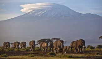 In this Monday, Dec. 17, 2012, file photo, a herd of adult and baby elephants walks in the dawn light in Amboseli National Park, southern Kenya, as the highest mountain in Africa Mount Kilimanjaro in neighboring Tanzania is seen in the background. (AP Photo/Ben Curtis, File)
