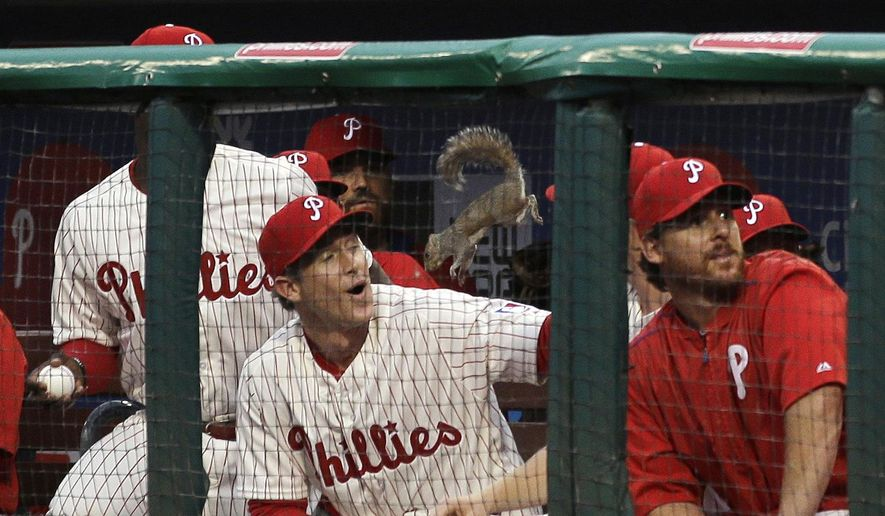 A squirrel leaps down into the Philadelphia Phillies' dugout near Chase Utley during the second inning of a baseball game against the St. Louis Cardinals, Friday, June 19, 2015, in Philadelphia. The squirrel climbed up the netting behind home plate and scurried along the support wire where it fell onto the Phillies dugout and then jumped down with the players. (AP Photo/Matt Slocum)
