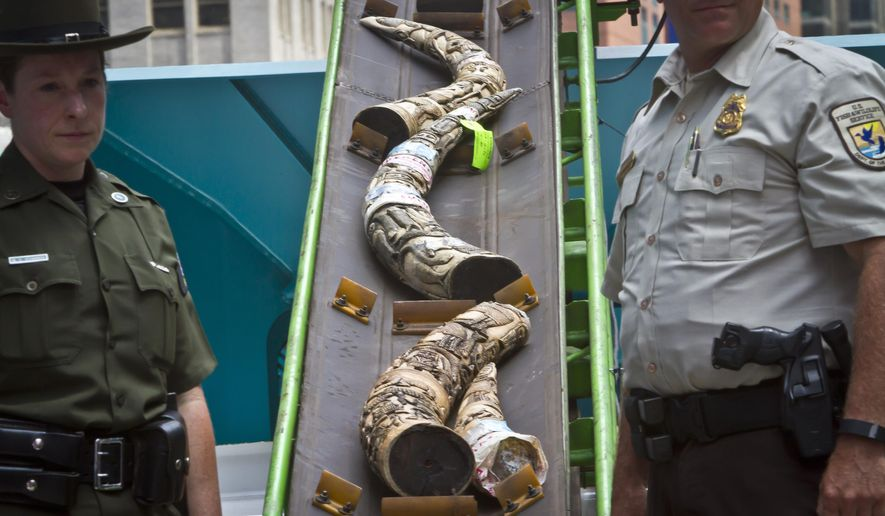 U.S. Fish and Wildlife stand next to a conveyor belt with confiscated illegal ivory to be crushed in an effort to halt elephant poaching and ivory trafficking, Friday, June 19, 2015 at Times Square in New York.  Animal advocates say the trade in ivory threatens to wipe out African elephants.(AP Photo/Bebeto Matthews)