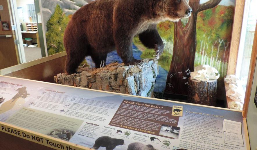 """In this undated photo, the famous Lincoln grizzly is displayed at the Forest Service office in Lincoln, Mont. The grizzly has become a popular attraction for visitors to the area. An interpretive display to go along with the bear was recently completed. """"We are very excited to show off the new display that features two stories: the story of this specific grizzly bear, and the story of how a community came together to transform this unfortunate accident to a positive educational opportunity,"""" said Lincoln District Ranger Michael Stansberry. (Tom Kuglin/The Independent Record via AP)"""