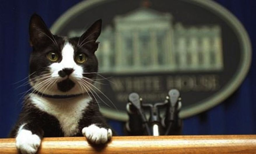 The Clinton's First Cat, Socks, was given free-reign in the White House during former president Bill Clinton's eight-year run. He's pictured above delivering some serious news to the press.