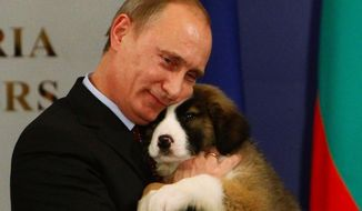 This Bulgarian shepherd puppy gained fame when Vladimir Putin received him as a gift from Bulgarian prime minister Boyko Borissov. Even Putin couldn't resist cuddling this pup.