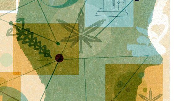 Illustration on medicinal marijuana by Donna Grethen/Tribune Content Agency