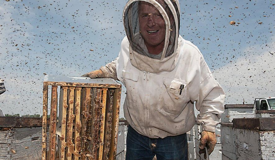 Bryant Honey owner Don Bryant shows off part of a bee hive on July 8, 2015, that has been filled with honey in Worland, Wyo. Bryant Honey has been doing business in the Worland area for 100 years and has spanned five generations of the family.    (Zach Spadt/Northern Wyoming Daily News via AP) MANDATORY CREDIT
