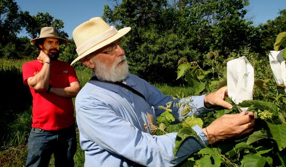 Phil Rutter, foreground, talks breeding hybrid hazelnuts at Badgersett Research Corp. north of Canton, Minn. while his son, Brandon Rutter, watches on June 19, 2015. They are two of the three authors of a new book on raising hybrid hazelnuts. (John Weiss/The Rochester Post-Bulletin via AP) MANDATORY CREDIT