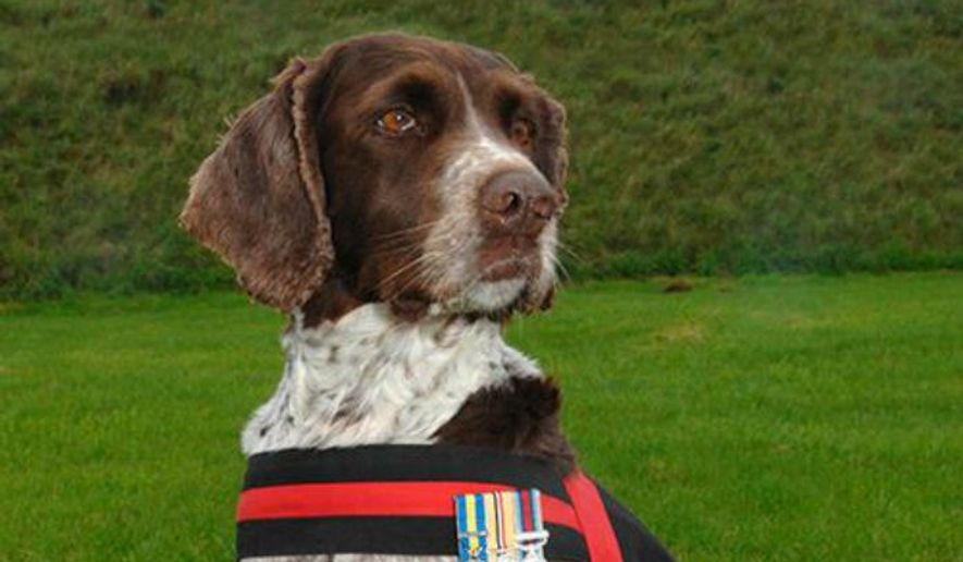 "Buster the bomb-sniffing dog was declared the Royal Air Force's ""official lifetime mascot"" for saving thousands of lives during five tours of duty. (Image: U.K. Ministry of Defense) ** FILE **"