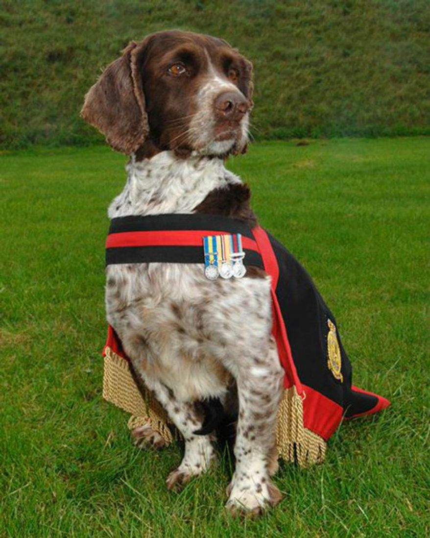 """Buster the bomb-sniffing dog was declared the Royal Air Force's """"official lifetime mascot"""" for saving thousands of lives during five tours of duty. (Image: U.K. Ministry of Defense) ** FILE **"""