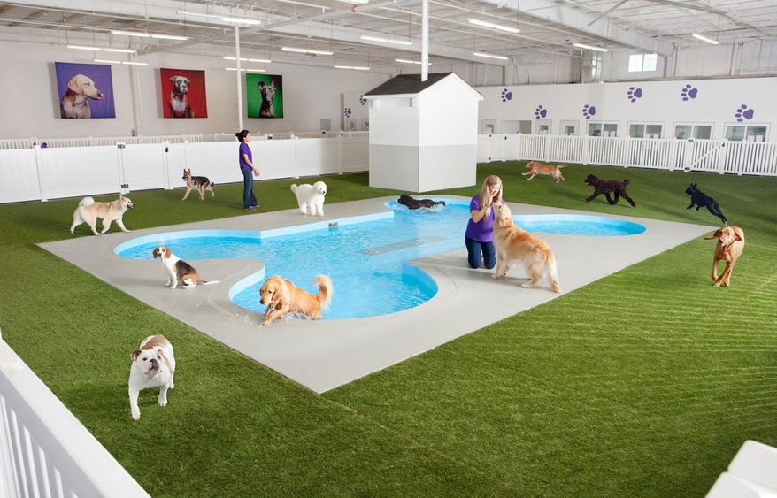 This undated artist rendering provided by Classic Communications courtesy of ARK Development depicts Paradise 4 Paws, a holding area for dogs in a new luxury terminal at New York's John F. Kennedy International Airport.  The privately owned ARK, as it's called, will handle the more than 70,000 animals that pass through JFK each year, including dogs, cats, horses, cows, birds, sloths and aardvarks. It will sit on the site of an unused cargo terminal leased from the Port Authority of New York and New Jersey that runs the airport. (Classic Communications courtesy of ARK Development via AP)