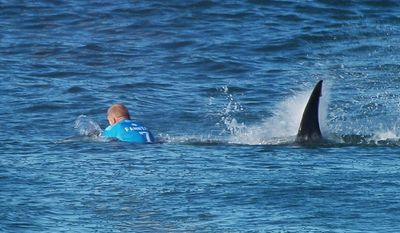 In this image made available by the World Surf League, Australian surfer Mick Flanning is pursued by a shark, in Jeffrey's Bay, South Africa,  Sunday, July 19, 2015. Knocked off his board by an attacking shark, a surfer punched the creature during the televised finals of a world surfing competition in South Africa before escaping. Fanning was attacked by a shark on Sunday during the JBay Open but escaped without injuries. (W orld Surf League via AP)  MANDATORY CREDIT   FOR ALL ONLINE USE PLEASE INCLUDE A LINK TO WORLDSURFLEAGUE.COM.