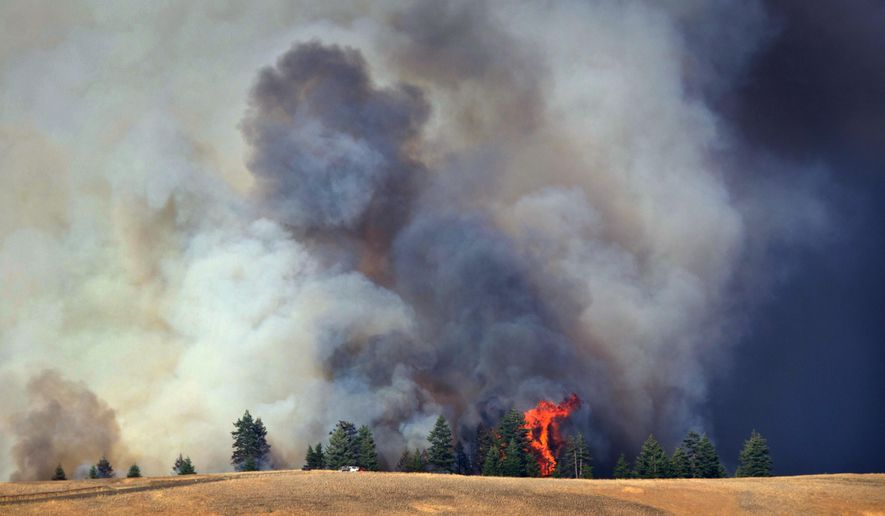 A tree flares up along the southwestern edge of the Blue Creek fire  in the Blue Mountains near Walla Walla,  Wash., on Monday, July 20, 2015.  Several wildfires lit up Washington state on Tuesday, closing freeways, including a major east-west artery, destroying at least one home and threatening dozens of others. (Greg Lehman/Walla Walla Union-Bulletin via AP).