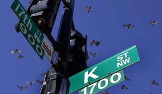 Pigeons fly over the intersection of 17th and K streets in northwest Washington on Jan. 26, 2006. (Associated Press) **FILE**