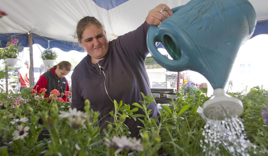 In this May 22, 2015 photo, Tiffany McDonald of A&T Produce Farm waters flowers at the Downtown Saginaw Farmers' Market in Saginaw, Mich.   A Saginaw project that includes a new outdoor farmers market and a year-round indoor market is getting a $1 million boost from the state, officials said. The funding for the Saginaw Downtown Development Authority will help officials address potential contamination at two downtown locations, including former offices for The Saginaw News and an ex-Firestone Tire site, the Michigan Department of Environmental Quality announced on Wednesday July 29, 2015.  (David C Bristow /The Saginaw News via AP) ALL LOCAL TELEVISION OUT; LOCAL TELEVISION INTERNET OUT; MANDATORY CREDIT