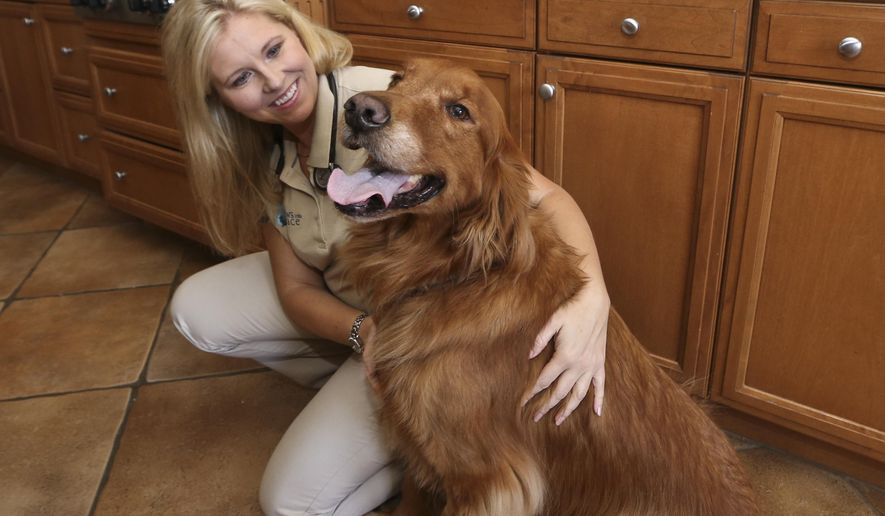 Dr. Jessica Vogelsang, a hospice veterinarian for Paws Into Grace and the author of All Dogs Go To Kevin: Everything Three Dogs Taught Me,  poses for a photo with Brody, her golden retriever Tuesday, July 28, 2015, in San Diego. Dogs provide comfort not just in death, but in other difficult times, whether it's depression, job loss or a move across country. Dogs know when people are dying or grieving through body language cues, smells only they can detect and other ways not yet known, experts say.  (AP Photo/Lenny Ignelzi)