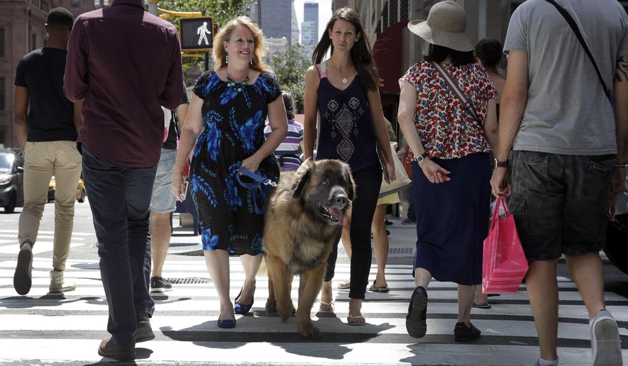 In this Wednesday, Aug. 5, 2015 photo, Morgan Avila, left center, walks Magnito, a Leonberger, as he's evaluated by Sarah Fraser, right center, through pedestrians on Madison Ave. during a demonstration of an urban canine good citizen test for city dogs in New York. (AP Photo/Richard Drew)