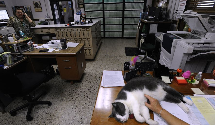 ADVANCED FOR RELEASE MONDAY, AUGUST 17, 2015  Thomas the cat enjoys a belly-rub from Joanie Gipson while laying on her desk in the Stephens County Clerk's office July 24, 2015 as Kristi Strawbridge talks on the phone. The cat has lived there for over two years. (Ronald W. Erdrich/Abilene Reporter-News via AP)