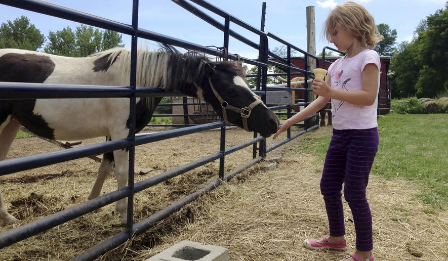 In this Friday, Aug. 7, 2015 photo, Beatrice LeVesque of Montreal feeds a horse at Allenholm Farm apple orchard in South Hero, Vt.  As more farms open up to visitors for apple picking, hay rides and corn mazes, extension officials are urging the owners to take steps so their facilities and equipment are safe to help prevent accidents. (AP Photo/Lisa Rathke)