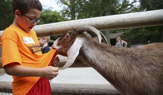 FOR USE SUNDAY, AUG. 16, 2015 OR THEREAFTER-  In this photo taken on June 23, 2015, Keynen Lyam reacts as a goat bites down on his shirt inside the petting zoo during Zoo Camp, at the Lincoln Children's Zoo. Zoo Camp focuses on animal interaction and behind the scene experiences for children during the summertime. (Jenna Vonhofe/The Journal-Star via AP) LOCAL TELEVISION OUT; KOLN-TV OUT; KGIN-TV OUT; KLKN-TV OUT; MANDATORY CREDIT