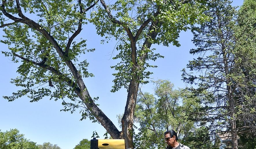 ADVANCE FOR SUNDAY, AUG. 16- In this photo taken on Aug. 12, 2015, Tony Coca uses the 'stumper' to remove a dead tree in the 2400  block of 7th Avenue in Pueblo Colo. Weather conditions, especially a hard freeze last November, left lots of damaged and dead trees throughout the city. (John Jaques/The Pueblo Chieftain via AP) MANDATORY CREDIT