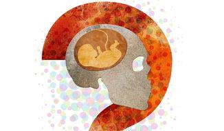 Fetus Brain Illustration by Greg Groesch/The Washington Times