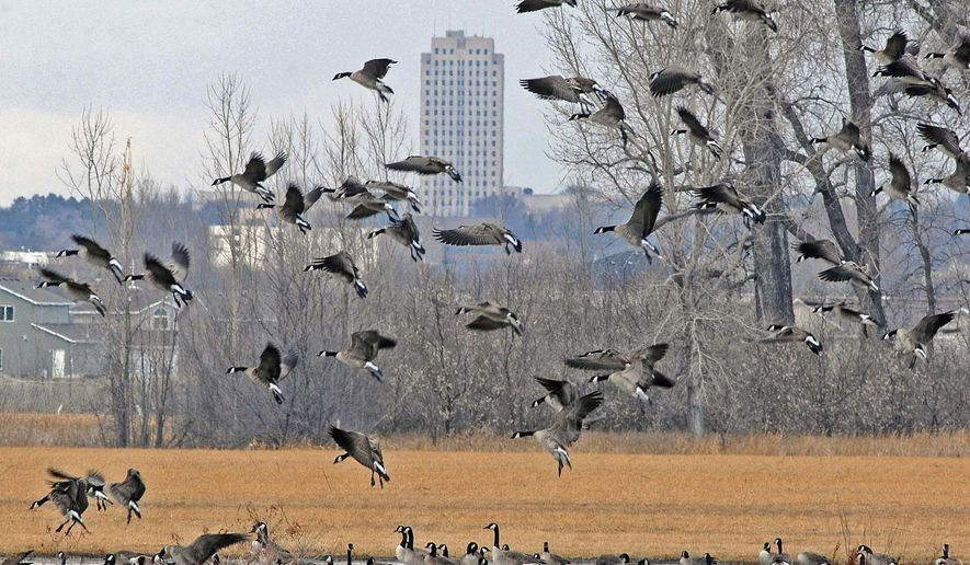 FILE - In this March 19, 2014 file photo, a flock of geese land in a wetland in south Bismarck, N.D. The federal Agriculture Department is accepting an additional 25,000 acres of North Dakota land into programs under the Conservation Reserve Program umbrella targeted at wetlands and other wildlife habitat.  (AP Photo/The Bismarck Tribune, Tom Stromme, File)