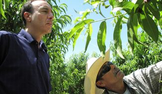 Dan Gerawan (left), owner of Gerawan Farming Inc., talks with crew boss Jose Cabello in a nectarine orchard near Sanger, California. Gerawan Farming is in a battle with the United Farm Workers, which wants to represent thousands of workers at the family farm. (Associated Press)